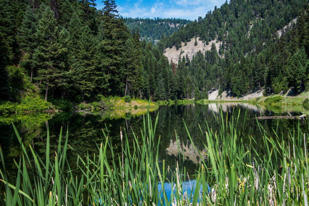 USA Lake Forests Fir Chesaw Road Beaver Lake Nature wallpaper