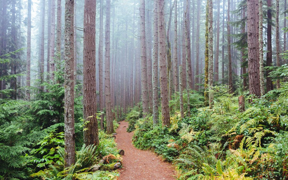 USA Forests Washington Trunk tree Trail Issaquah Nature wallpaper