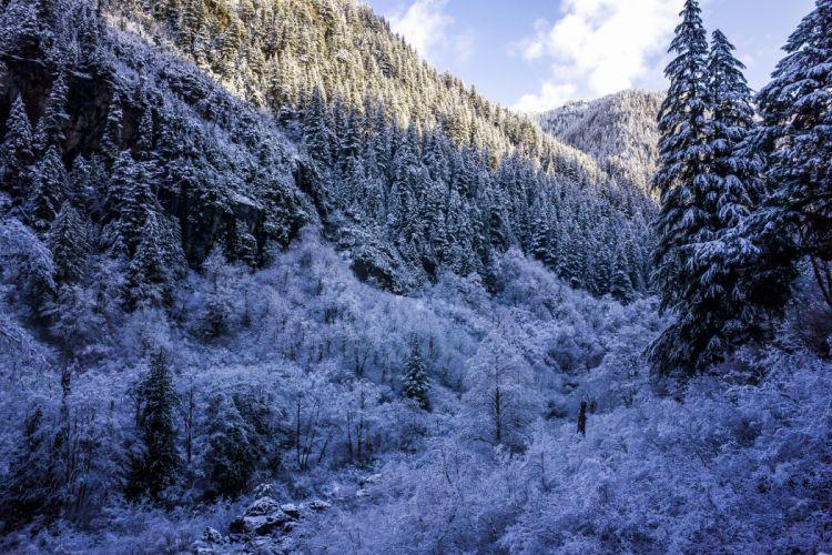 Winter Forests Snow Fir Nature wallpaper