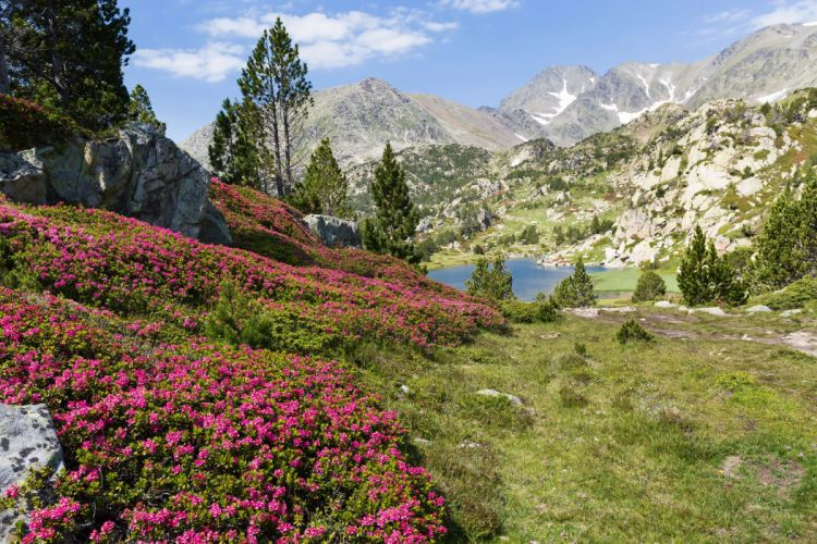 France Mountains Lake Scenery Trees Grass Eastern Pyrenees Nature wallpaper