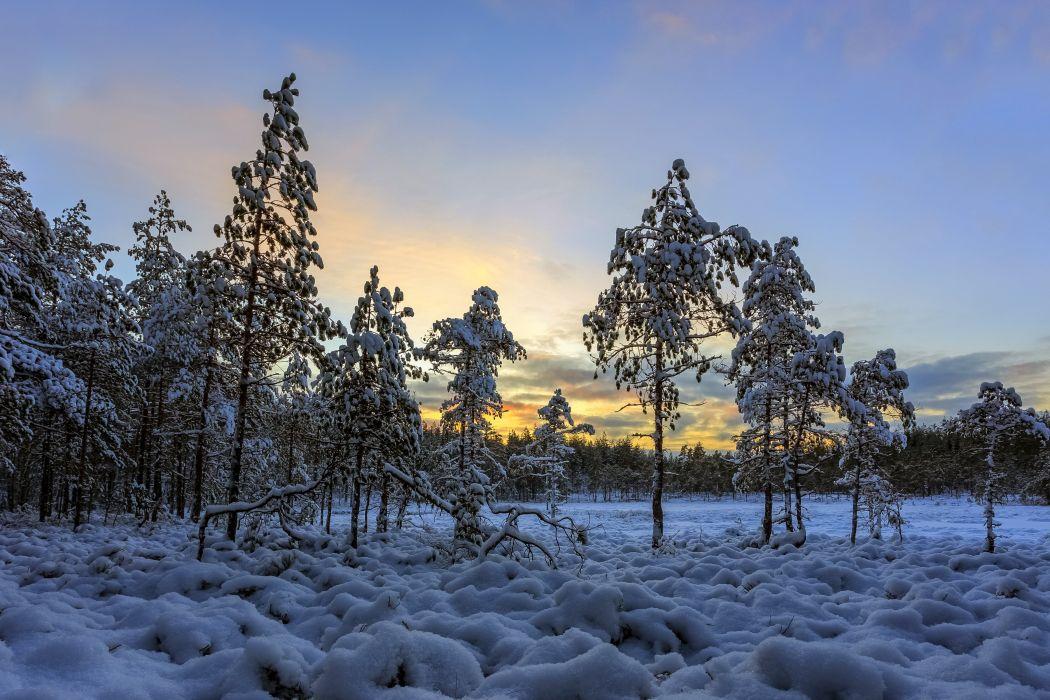 Seasons Winter Evening Trees Snow Nature wallpaper