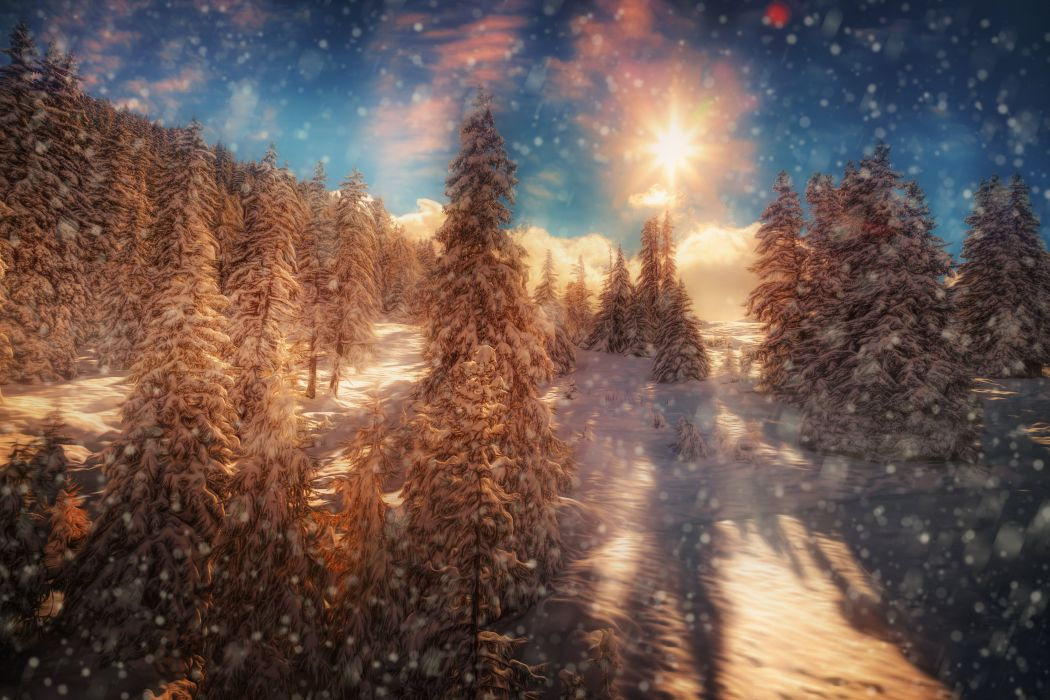 Seasons Winter Forests HDR Fir Snowflakes Rays of light Nature wallpaper