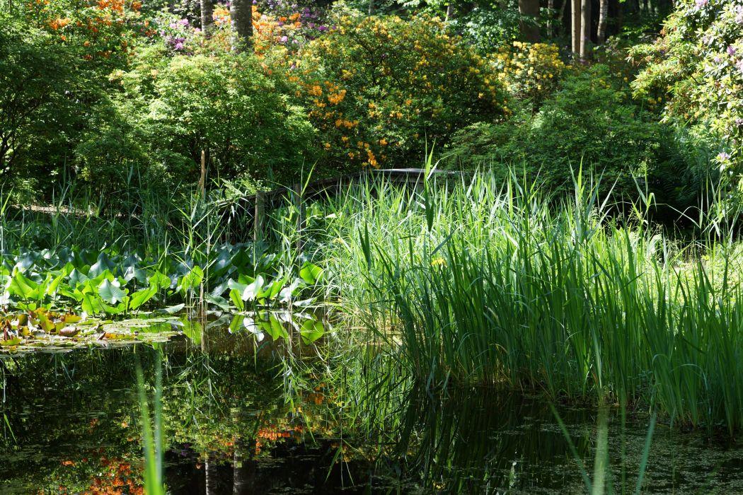 Switzerland Parks Pond Shrubs Park Seleger Moor Nature wallpaper