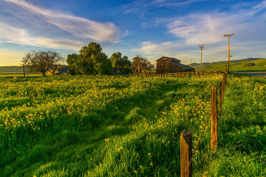 USA Fields Sky California Grass Tres Pinos wallpaper