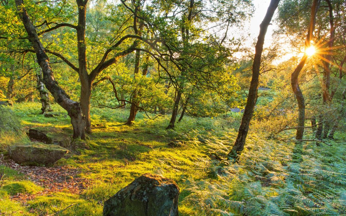 United Kingdom Trees Grass Rays of light Stanton Moor Nature wallpaper