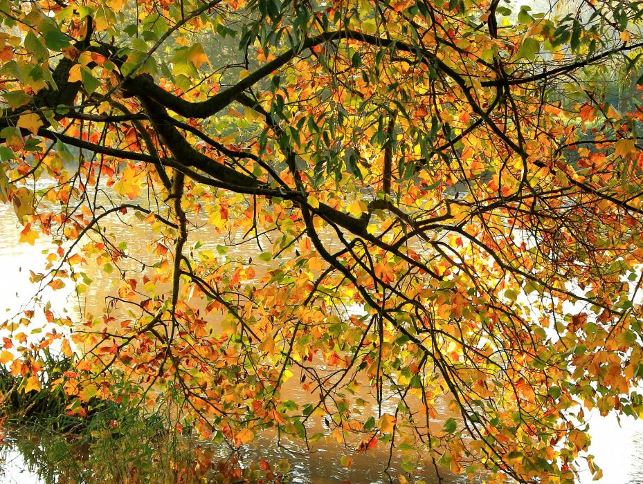 Autumn Branches Foliage Nature wallpaper