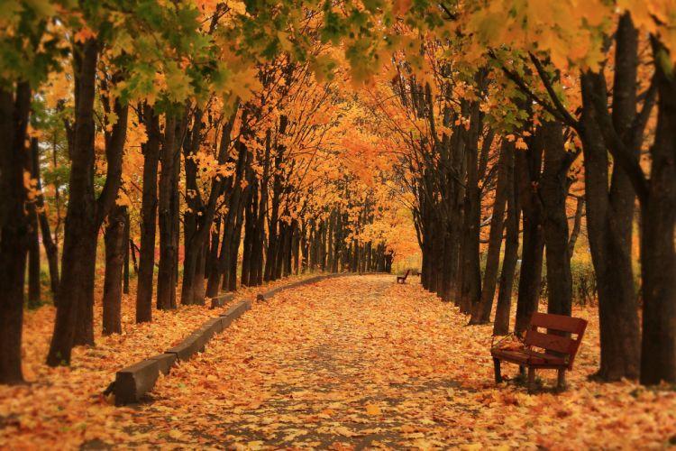 Autumn Parks Avenue Bench Trees Nature wallpaper