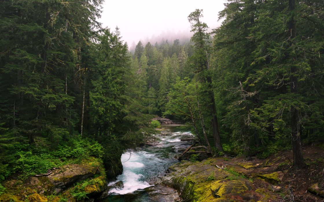 USA Forests Rivers Washington Lewis Nature wallpaper