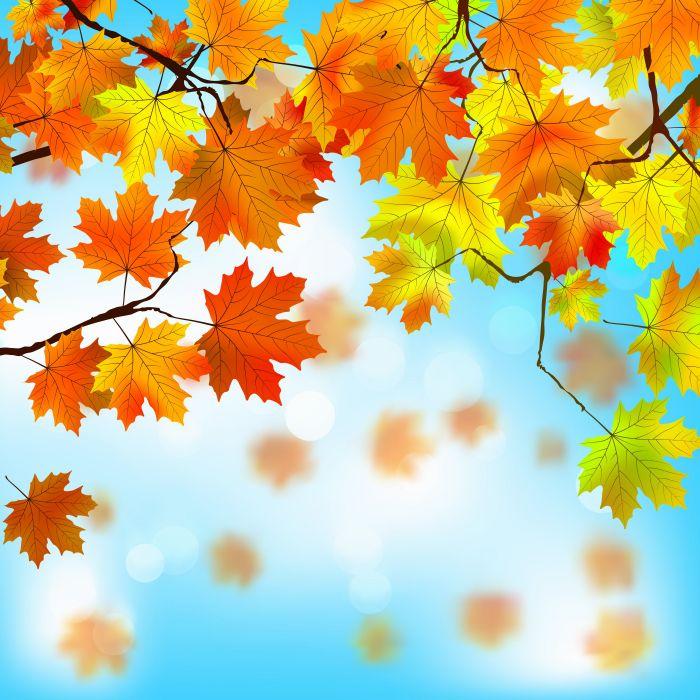 Autumn Foliage Maple Nature wallpaper