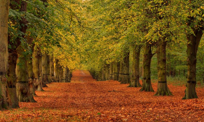 Autumn Trees Foliage Avenue Nature wallpaper