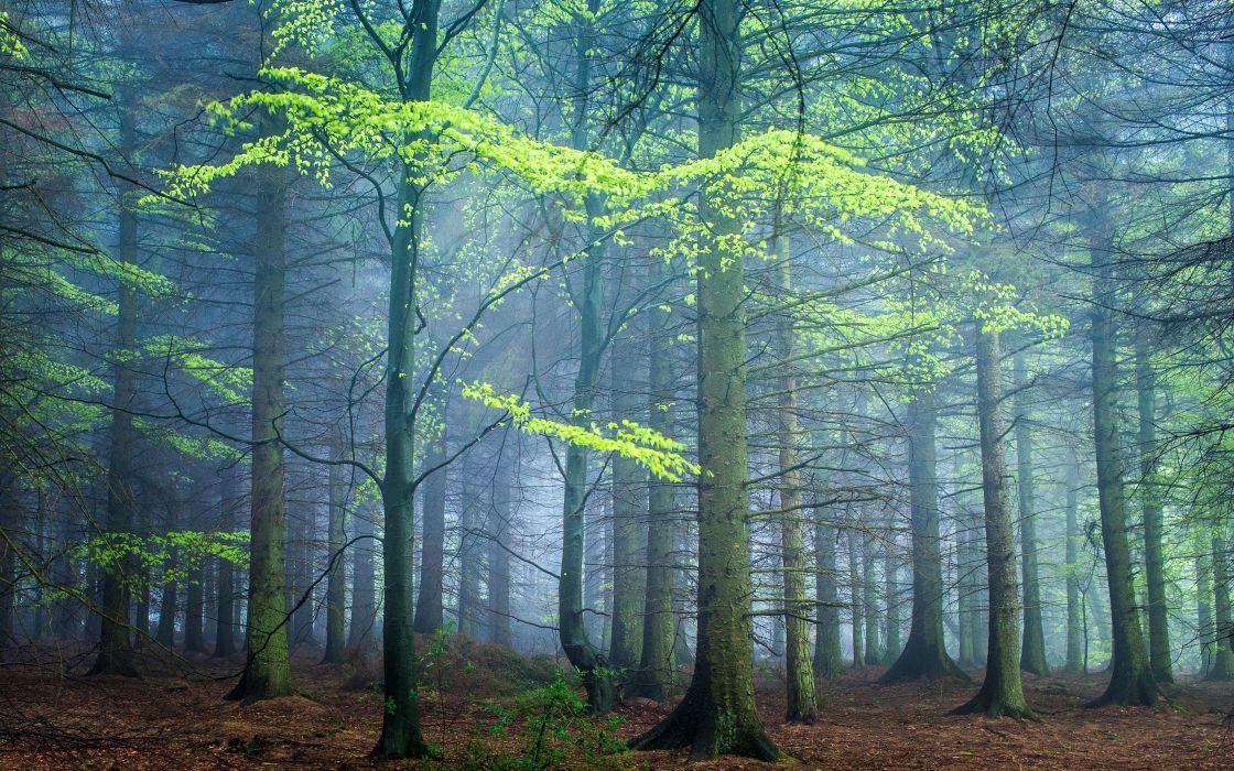 Forests United Kingdom Trunk tree Fog Darley Moor Nature wallpaper