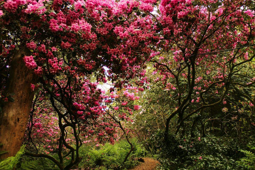 Switzerland Parks Flowering trees Park Seleger Moor Nature wallpaper