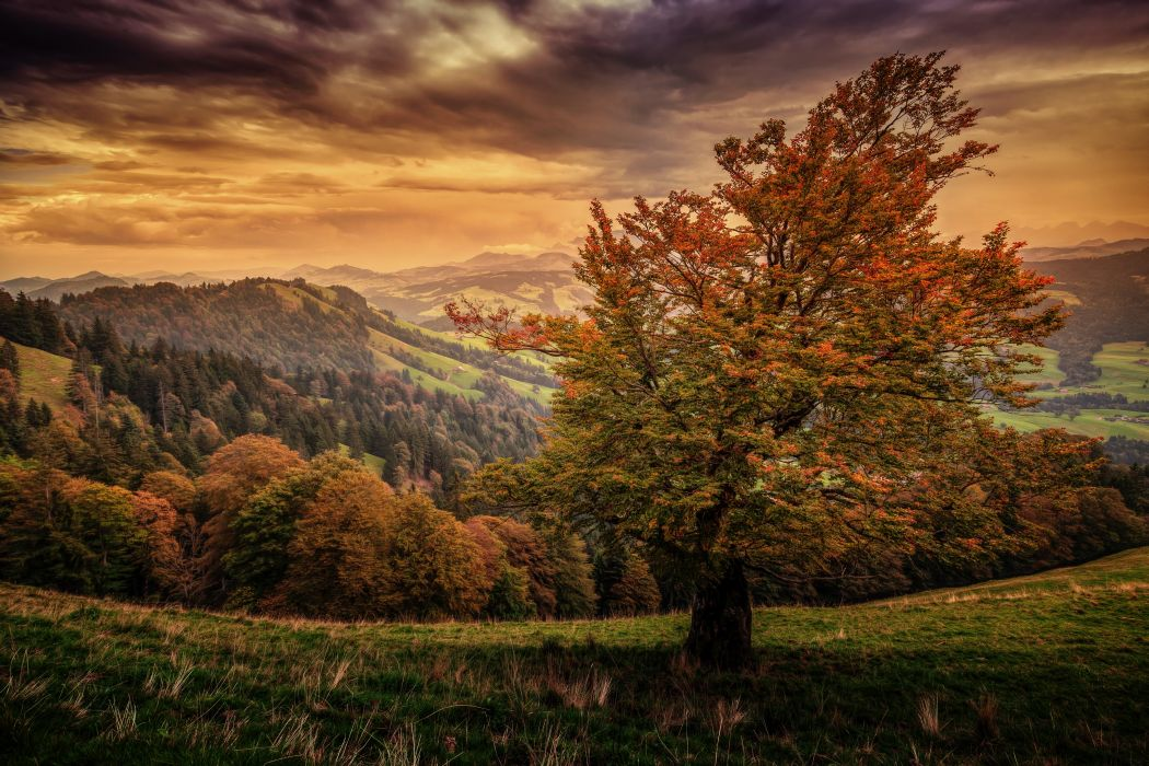 Switzerland Scenery Mountains Sky Autumn Trees Nature