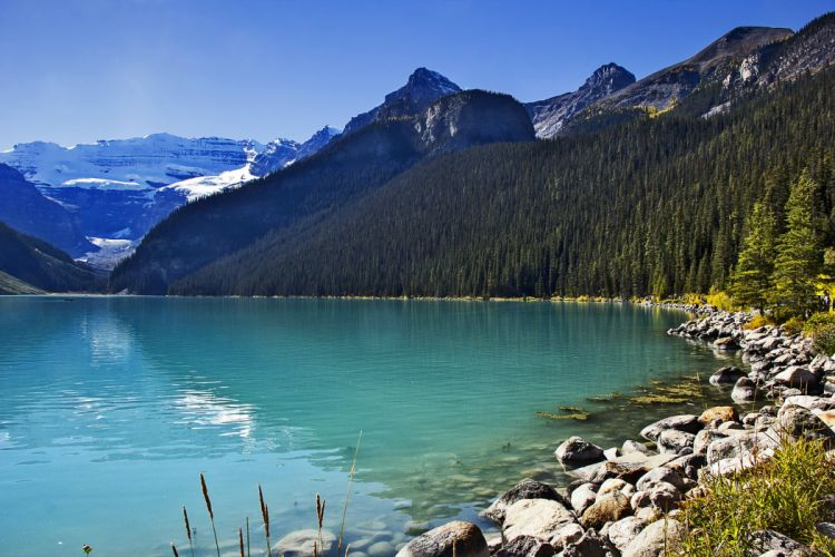 Canada Scenery Lake Mountains Forests Stones Lake Louise Alberta Nature wallpaper