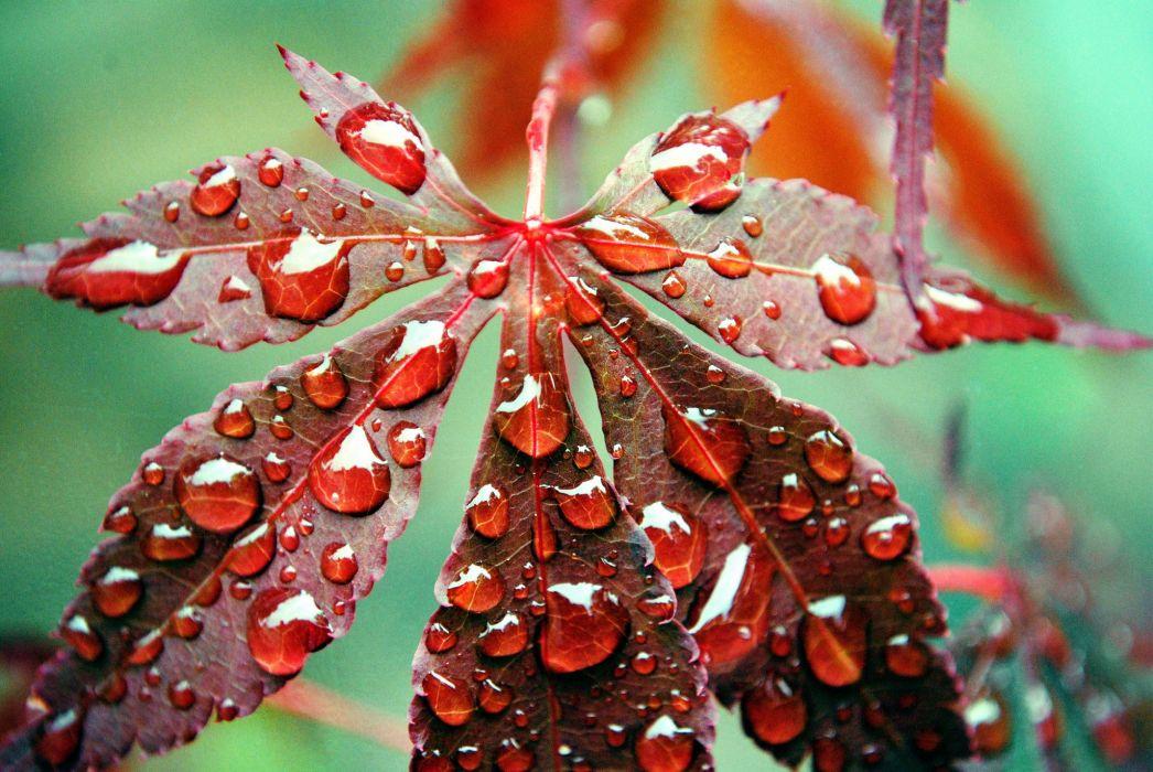 Closeup Foliage Drops Nature wallpaper