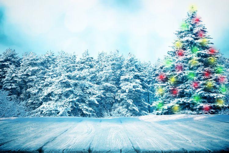 Christmas tree Fir Trees Snow Nature wallpaper