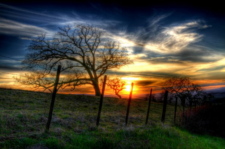 Scenery Sunrises and sunsets Grasslands Sky Trees Nature wallpaper