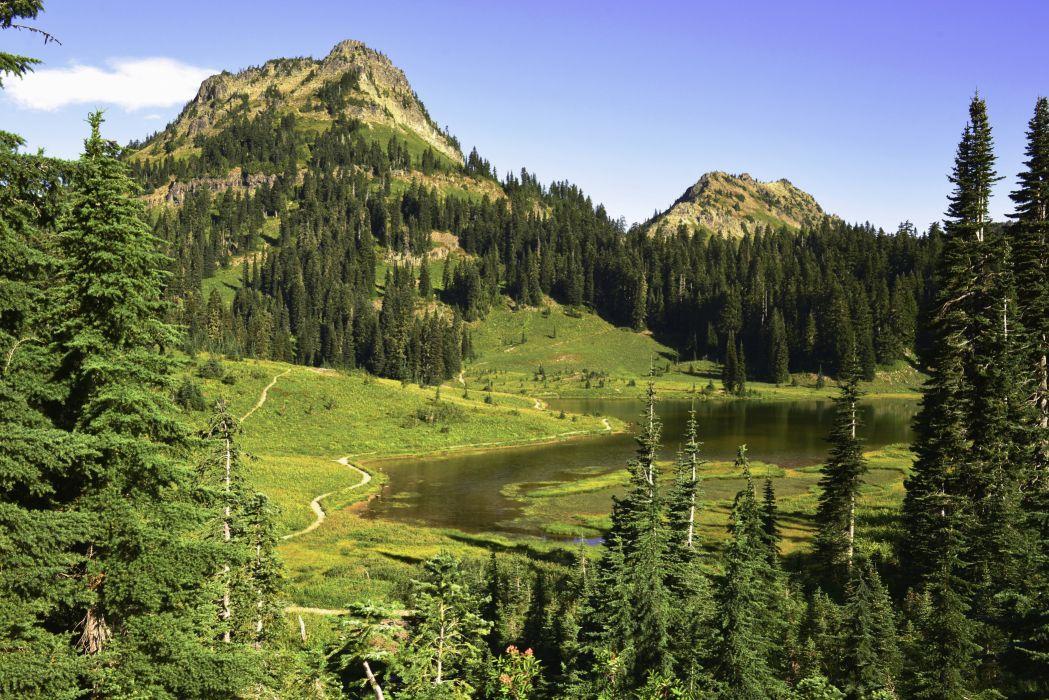 USA Parks Mountains Lake Fir Grass Mount Rainier National Park Nature wallpaper