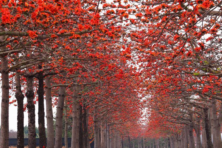 Autumn Parks Avenue Trees Nature wallpaper