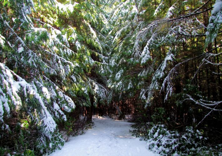 Canada Forests Winter Fir Snow Trail Ucluelet Nature wallpaper