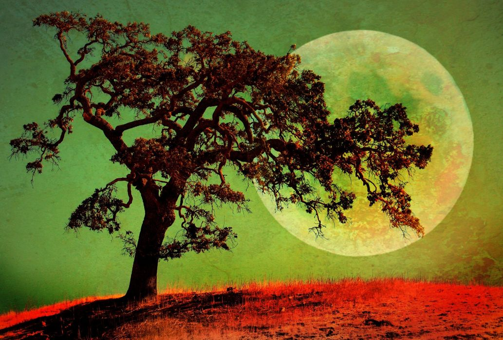 Planets Trees Nature moon wallpaper