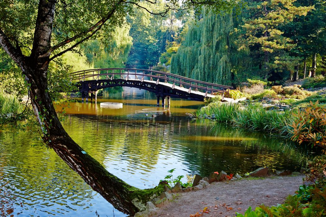 Parks Rivers Bridges Trees Trunk tree Nature wallpaper