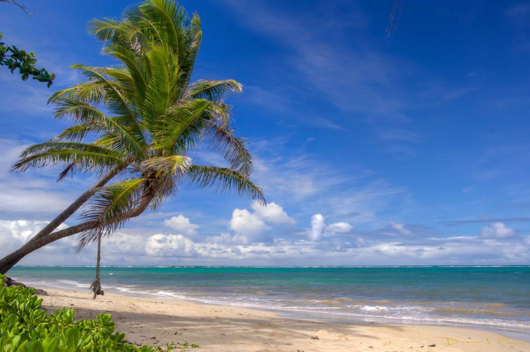 Sky Sea Palma Trees Beach Nature wallpaper