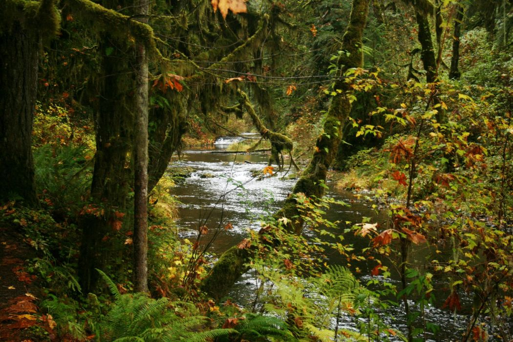USA Parks Rivers Forests Autumn Silver Falls State Park Nature wallpaper