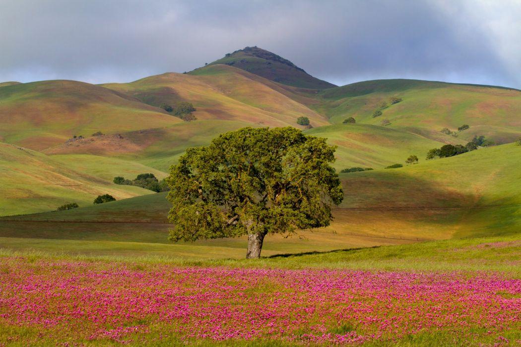 USA Scenery Grasslands Mountains California Trees Nature wallpaper