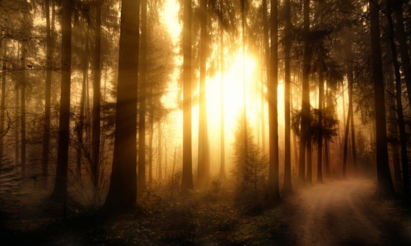 Forests Trees Rays of light Misty Forest wallpaper
