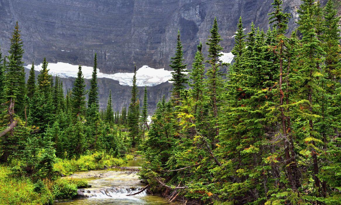 Forest Rivers Fir Nature wallpaper