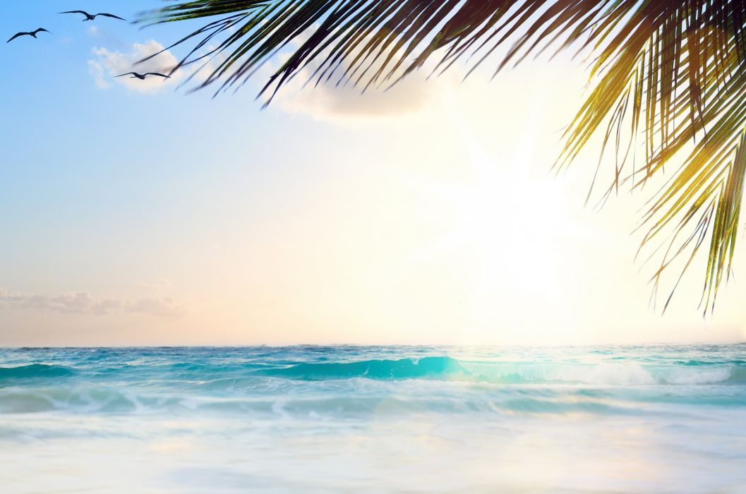 Sea Sky Resorts Palma Template greeting card Nature wallpaper