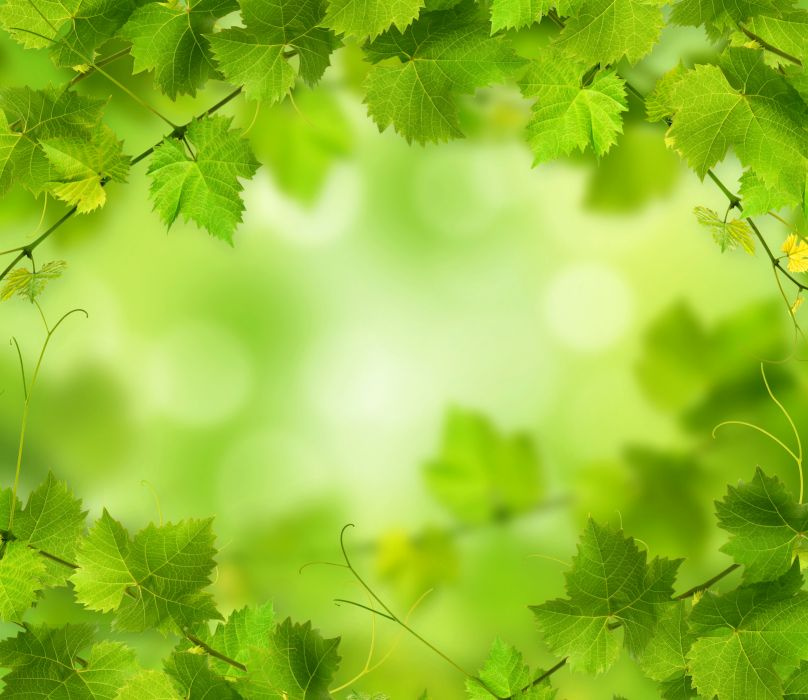 Foliage Green Nature wallpaper