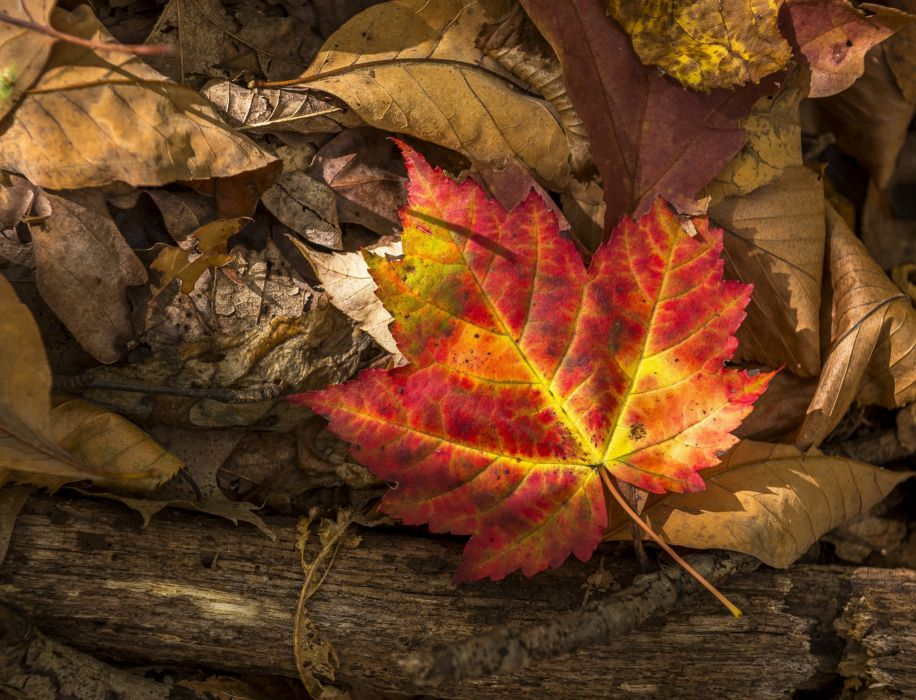 Autumn Closeup Foliage Nature wallpaper