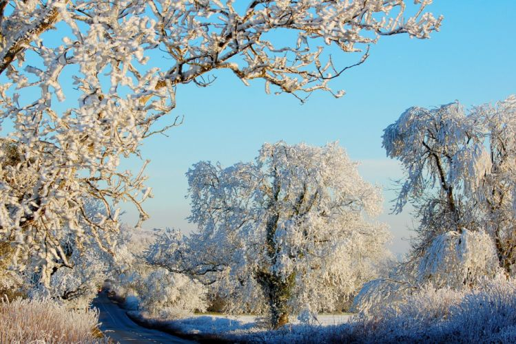 Winter Trees Snow Nature wallpaper