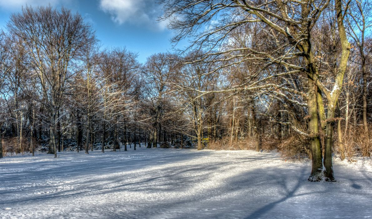 Winter Trees Snow HDR Nature wallpaper