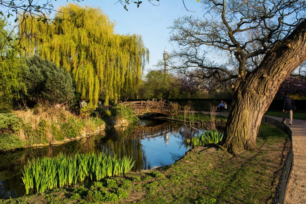 England Parks Rivers London Trunk tree Trees Nature wallpaper
