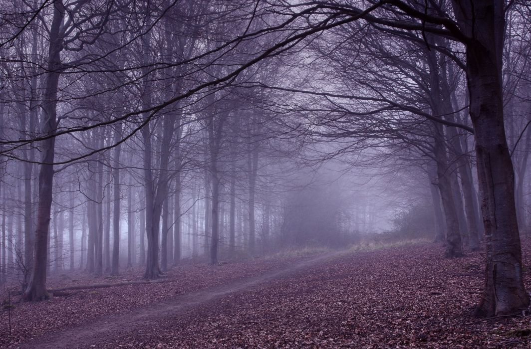 Autumn Trees Branches Fog Trail Nature wallpaper