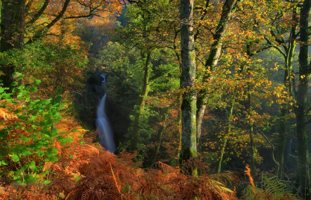 England Parks Forests Waterfalls Autumn Trunk tree Dockray Nature wallpaper