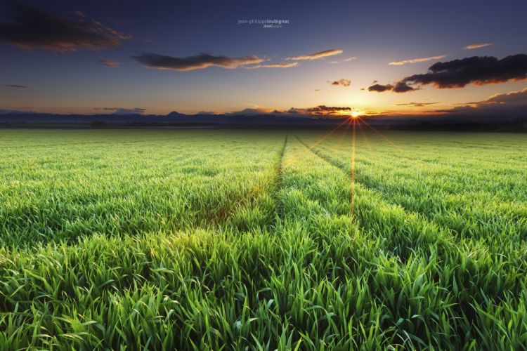 Fields Sky Sunrises and sunsets Evening Nature wallpaper