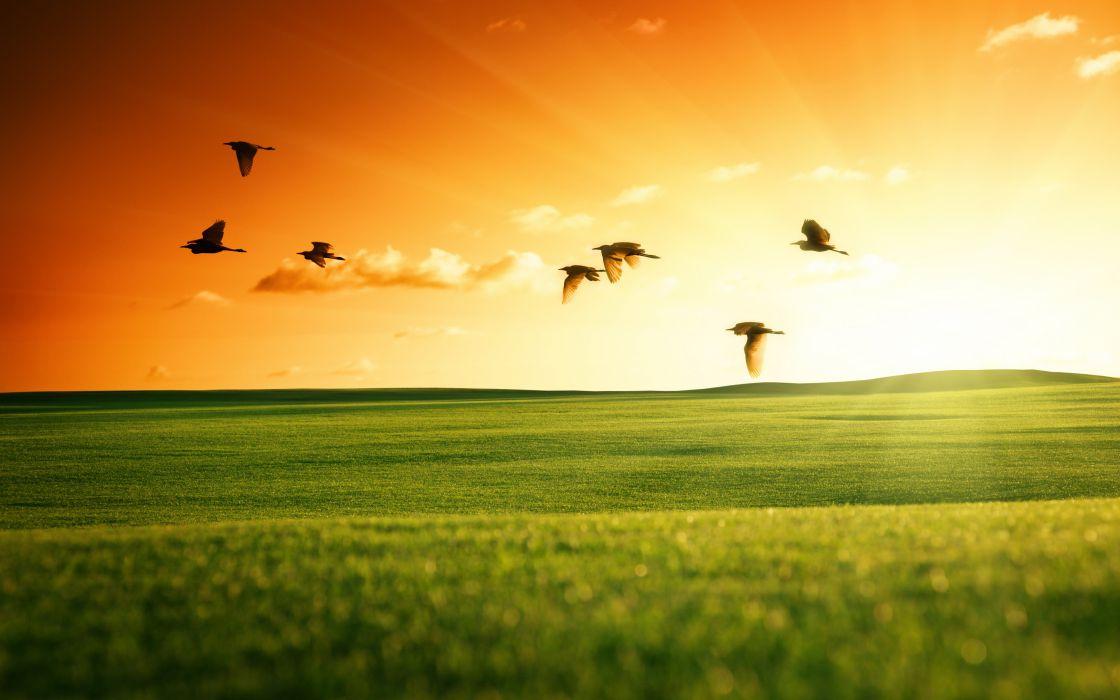 Fields Grasslands Birds Sunrises and sunsets Evening Nature wallpaper