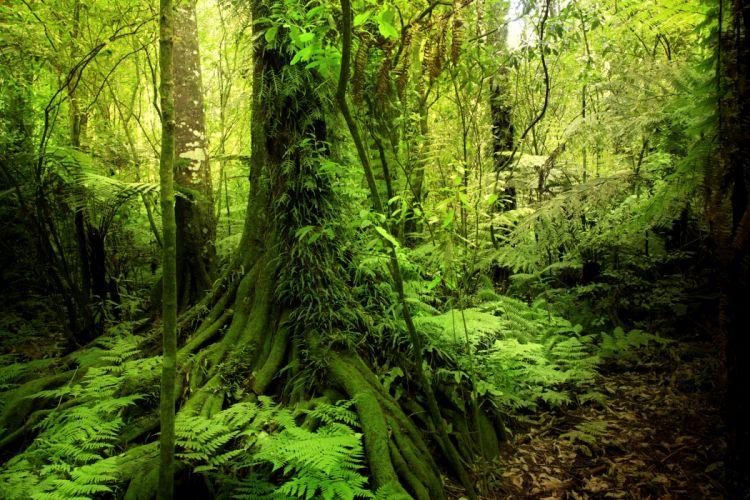 Tropics Forest Trunk tree Jungle Nature wallpaper