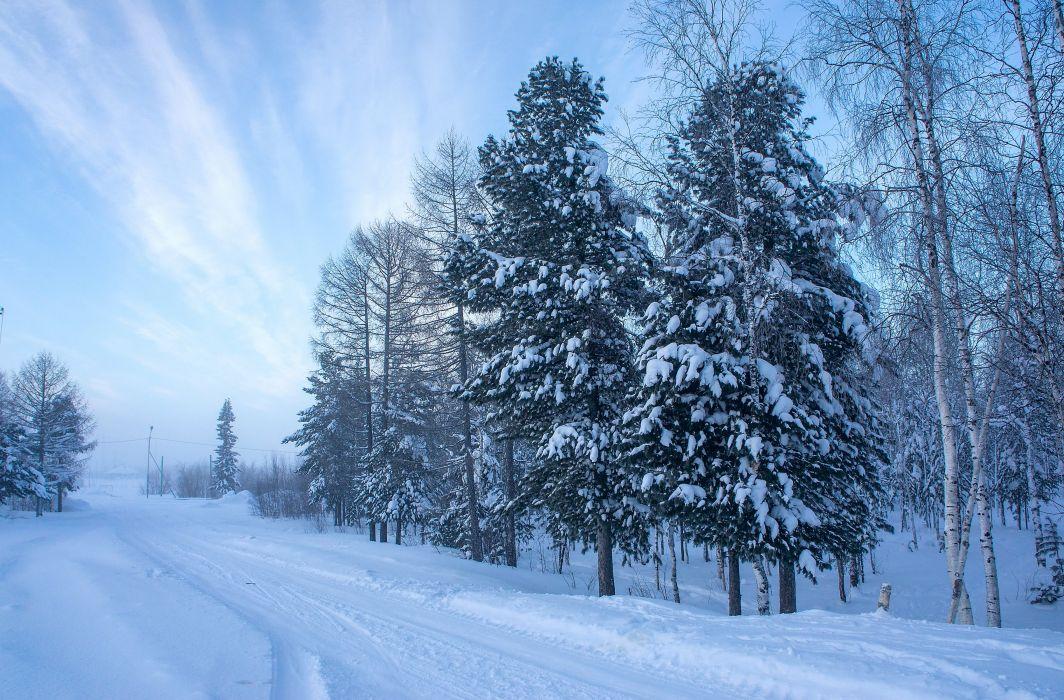 Winter Trees Snow Fir Nature wallpaper