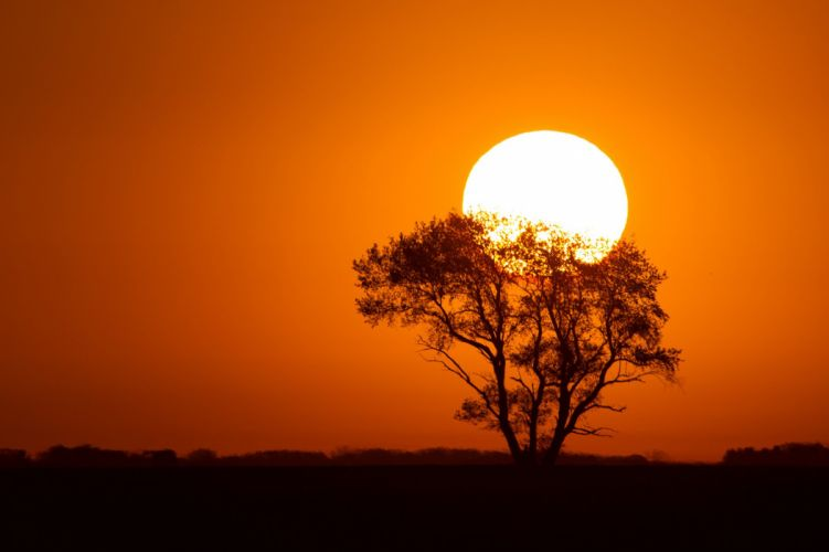 Sunrises and sunsets Sun Silhouette Trees Nature wallpaper
