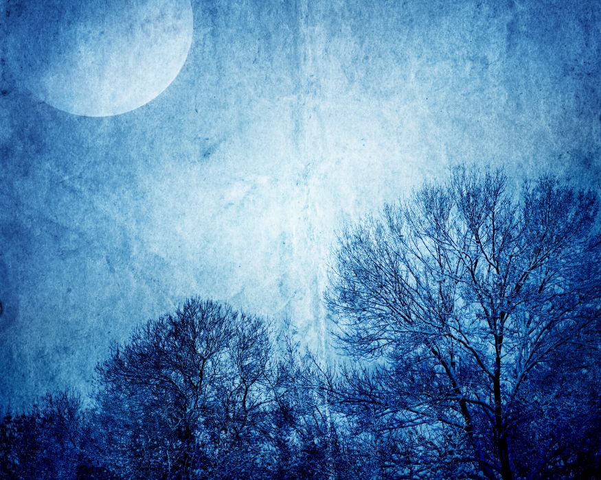Sky Night Moon Branches Nature wallpaper