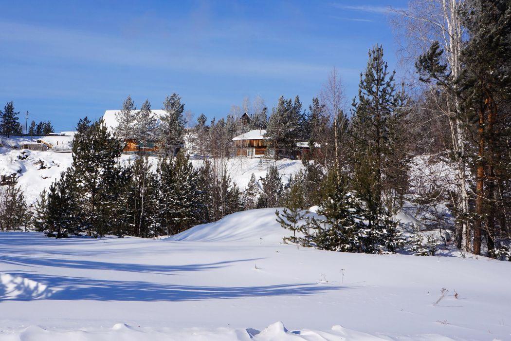 Winter Fir Snow Nature wallpaper