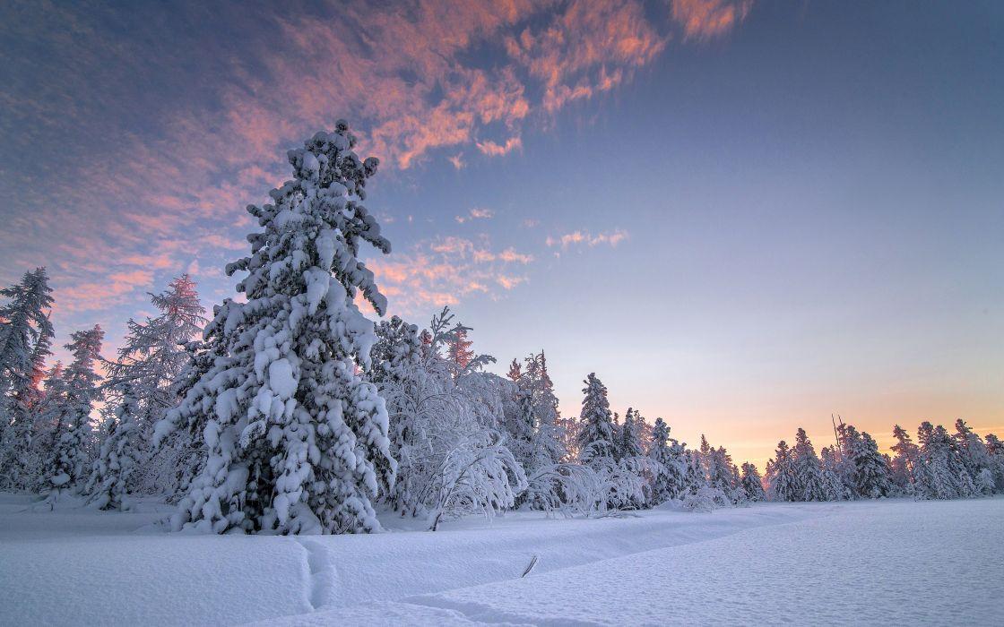Winter Sky Snow Fir Nature wallpaper
