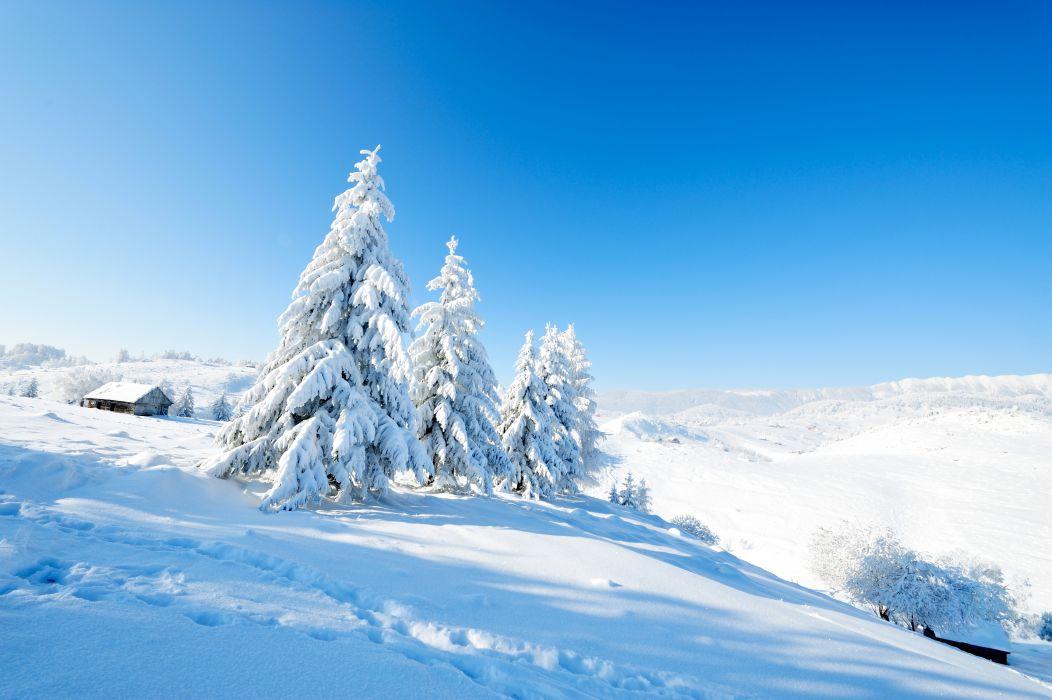 Winter Scenery Snow Fir Nature wallpaper
