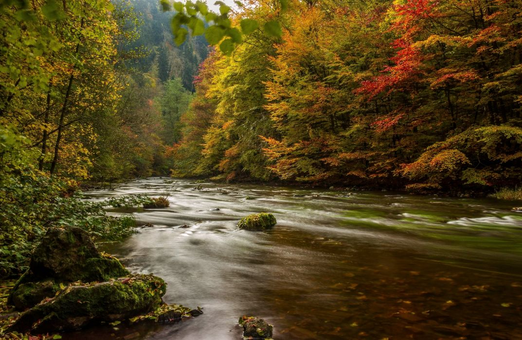 Rivers Forests Germany Autumn Harz Nature wallpaper