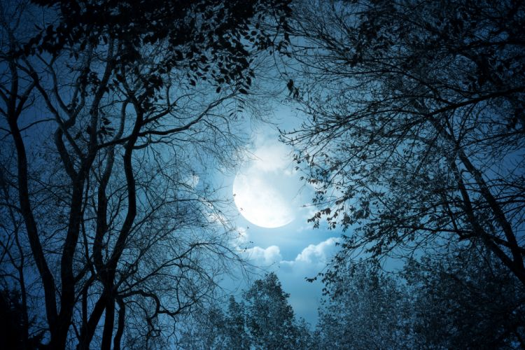 Sky Night Moon Branches Nature b wallpaper